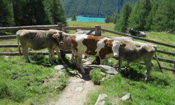 Alpenüberquerung: Vernagt-Stausee