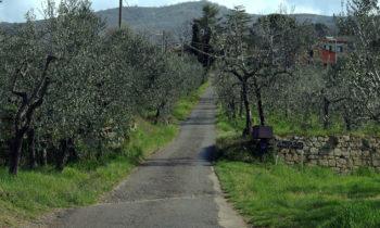 Radreise in der Toskana
