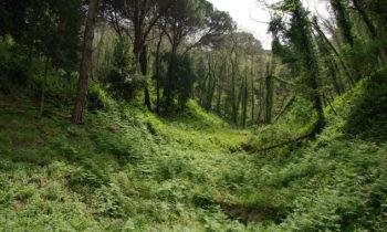 Wald auf Sizilien