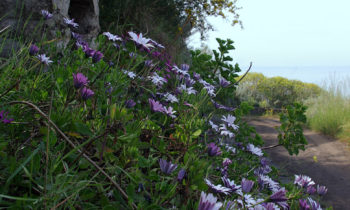 Blumen auf Stromboli