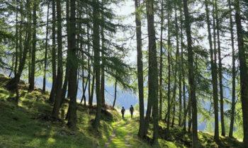 Friedensweg: Karnischer Höhenweg