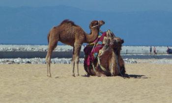 Am Strand von Tanger