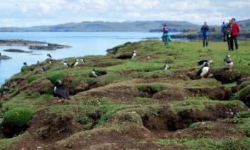 Wildlife Tour auf Lunga, Schottland