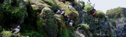 Wildlife Tour in Schottland, Innere Hebriden