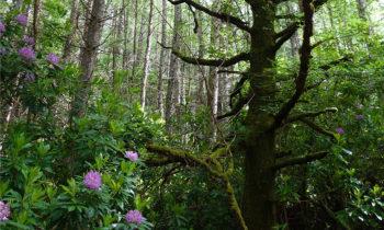 Wald nahe Glencoe