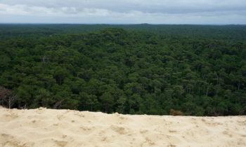 Blick auf den Wald von der Dune du Pilat