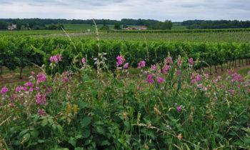 Weinbau nahe Bordeaux in Nouvelle-Aquitaine