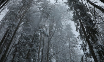 Winterwald am Eibsee