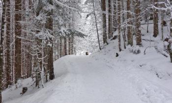 Winterwanderung am Eibsee