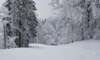 Winterwald am Herzogstand