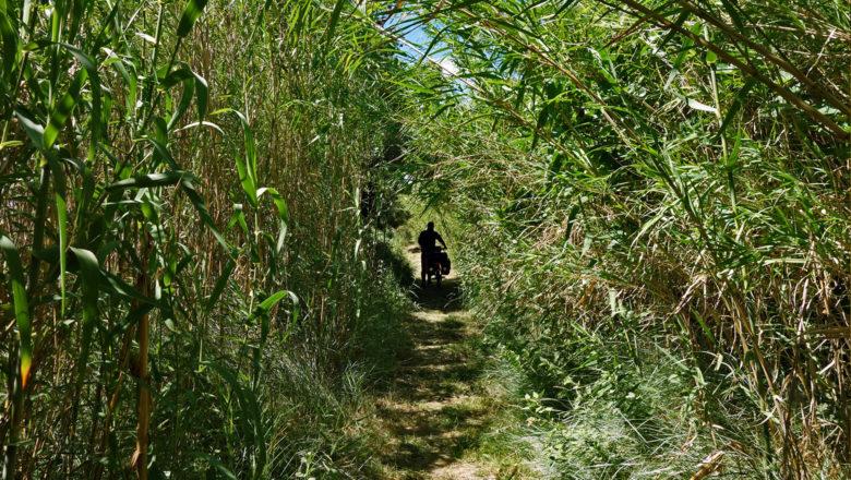 Im Schilf: Naturpark Narbonnaise en Méditerranée