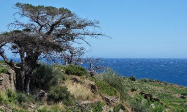 Pyrenäen am Mittelmeer