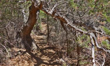 Wanderweg durchs Unterholz auf Tavolara