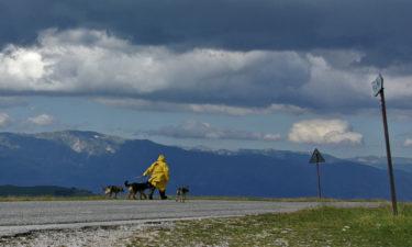 Schäfer nahe Campo Nevada