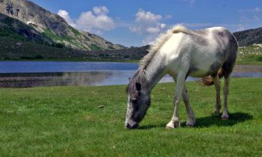 Pferd am Lac de Nino