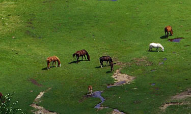 Wildpferde am Lac de Nino