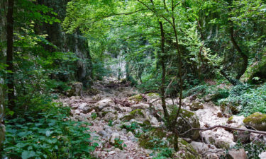 Wald in der Schlucht von Celano