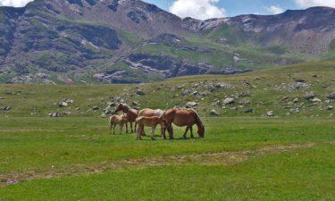 Pferde am Ibón Norte am GR 11