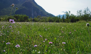 Alpenwiese am Alpe-Adria-Trail