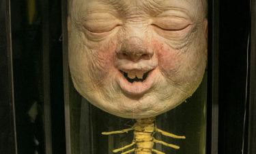 Eingelegter Kopf im Puppentheater Museum