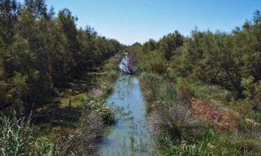 Kanal im Naturpark Camargue